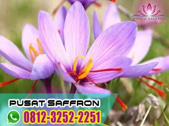 Grosir Wa 0812 3252 2251 Tsel Jual Putik Bunga Saffron Untuk Ibu Hamil Bandung Bogor Penjual Bunga Bunga Hamil