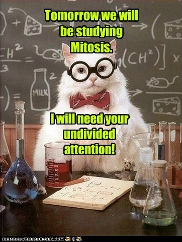 """Apparently chemistry cat knows some biology as well. (is it bad that I get this joke - mitosis & """"undivided"""" attention!!)"""