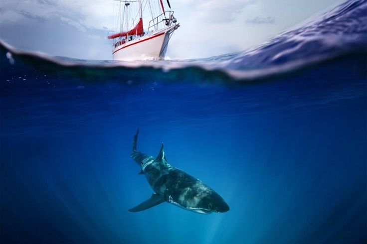 Shark tours and diving in #southafrica http://bit.ly/294ZRWx #dirtyboots #sharkdiving