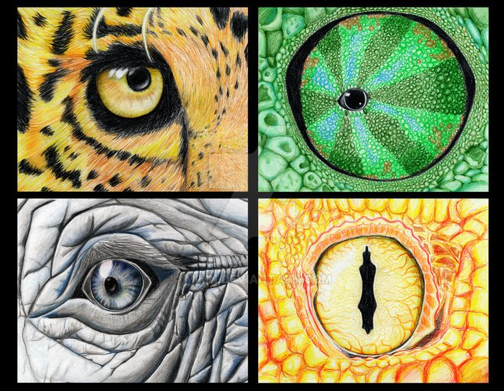 in school we had to create a poster for a zoo-event ... I was looking for animal eyes in the internet, found some and drew this... i used colored pencils (faber castell) I needed some weeks ... for...