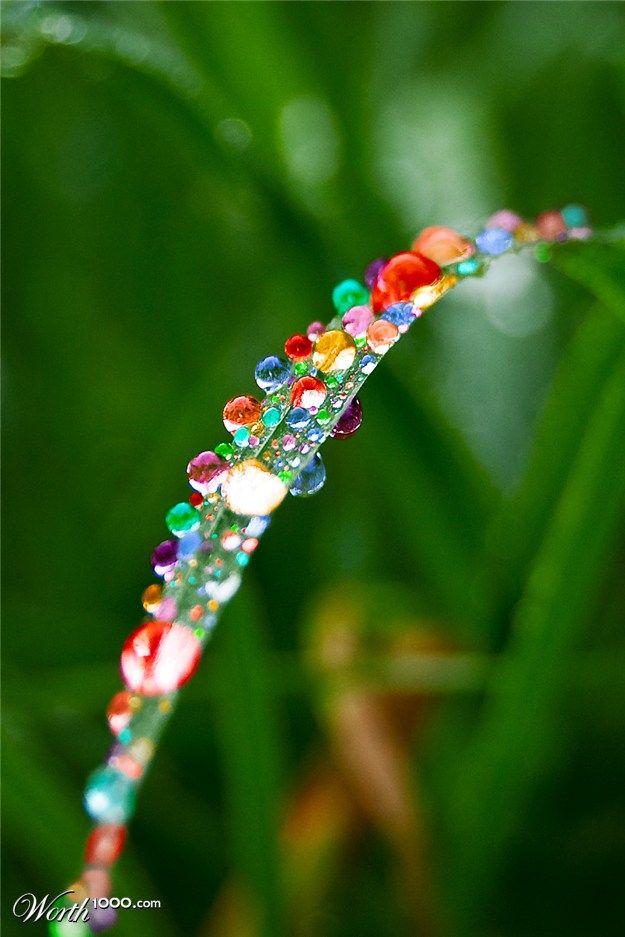 Rainbow in the Dew, beautiful