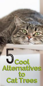 Not to worry, cat moms and dads, there are lots of alternatives to traditional cat trees. Here are a few of them!