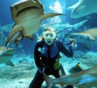 Underwater world in brisbane...