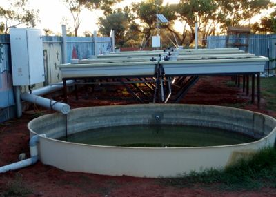 Commercial aquaponics tanks grow beds grow troughs for Hydroponics fish tank