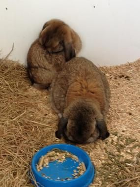Sven and Sprout up for adoption, neutered and vaccinated, litterbox trained, email bibbleandfamily@gmail.com