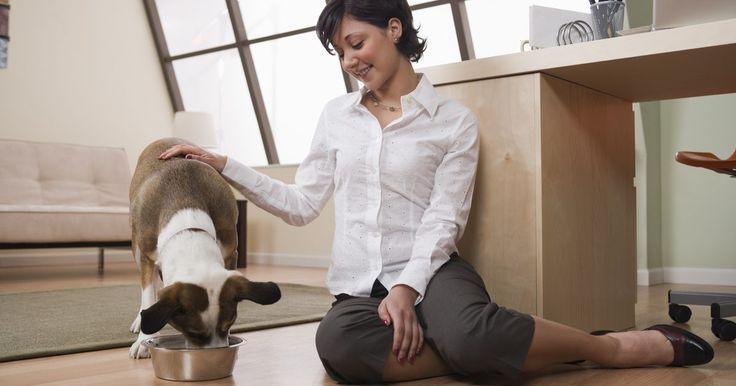 Cómo alimentar y dar agua a tu cachorro. Tu cachorro aprenderá lo que sea que le enseñes: está ansiosa por complacer y tú estás a cargo de lo que ella aprenda. Entrénala para que coma y beba en un horario para hacer el entrenamiento en casa más rápido y fácil para ti y para tu cachorro.