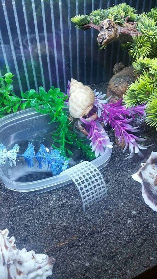 Hermit crabs need two types of waters, salt and fresh water. You should have enough that your largest crab will be covered with the water. A simple food container and plastic canvas are inexpensive and easy to do.