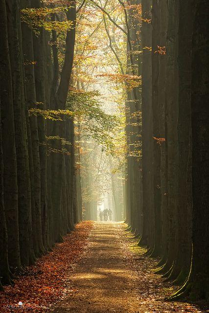 Lage Vuursche, The Netherlands
