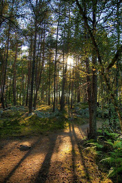 forêt de Fontainebleau, Île de France