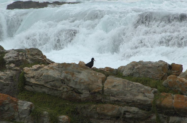The power of the waves. #CapePoint #EpicEnabled