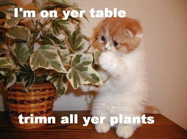 Oh My Freaking Stars!: Trimming & Kitties