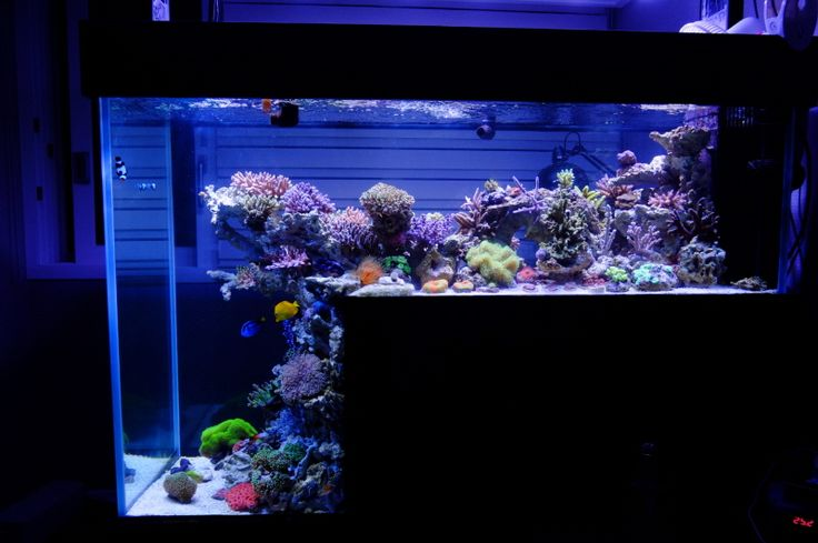how to drop ph in fish tank