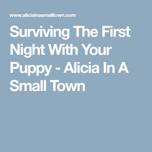 Surviving The First Night With Your Puppy - Alicia In A Small Town