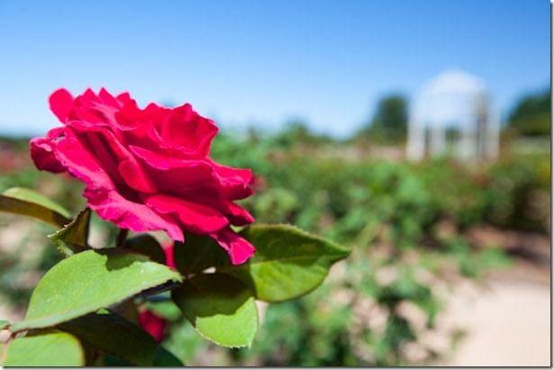 Australia's Largest Inland Botanical Gardens, Mildura | CaravanCampingOz.com