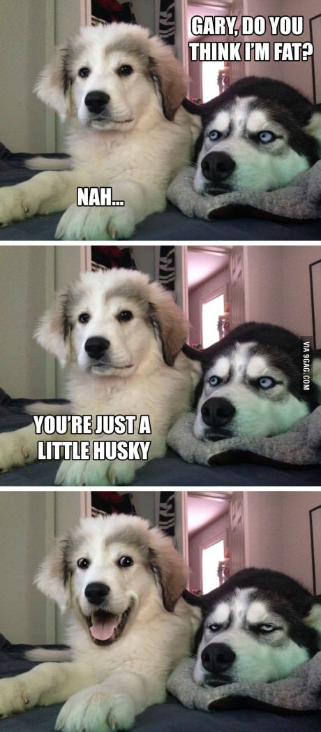 I have a Great Pryenees and a Shepsky and they love each other but sometimes I think they say this to each other