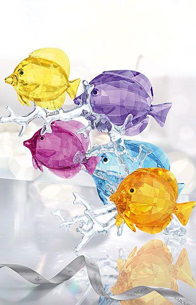 Rainbow Fish Family