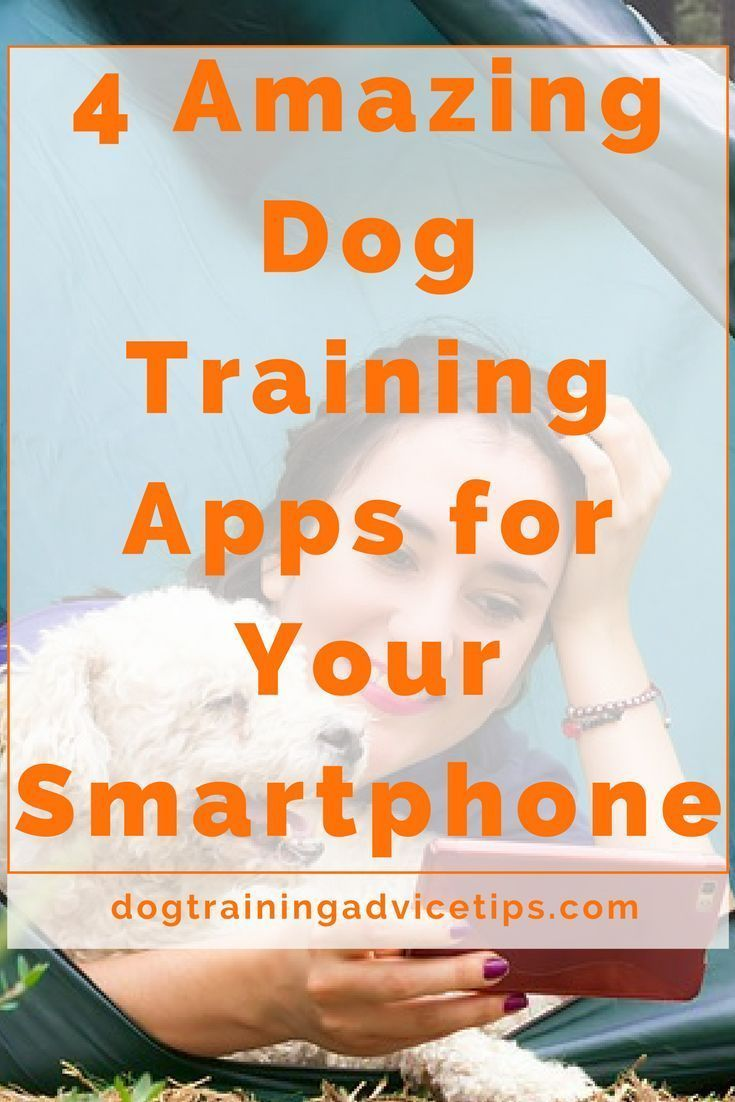 How To Clicker Train An Older Dog
