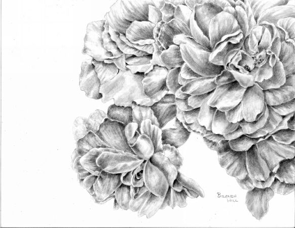 Group Hug floral graphite drawing by Brenda Hill