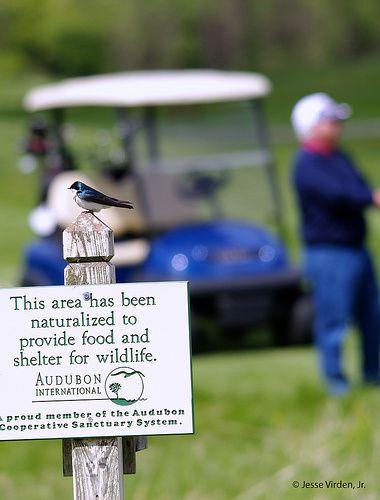 Greenwash Alert: Why is Audubon Endorsing Golf Courses?