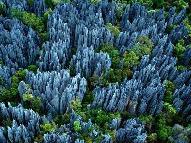 los Tsingy de Bemaraha se presentan como un laberinto de espolones rocosos. Hay varios circuitos, más o menos vertiginosos, que surcan esta meseta calcárea fracturada por las aguas de lluvia, y cuyas puntas y fallas acogen a numerosas especies endémicas.