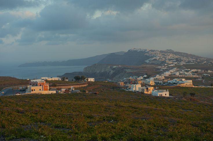 Santorini grape vines