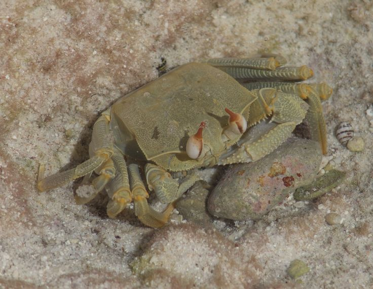 R Crabs Data 41 best images about c...