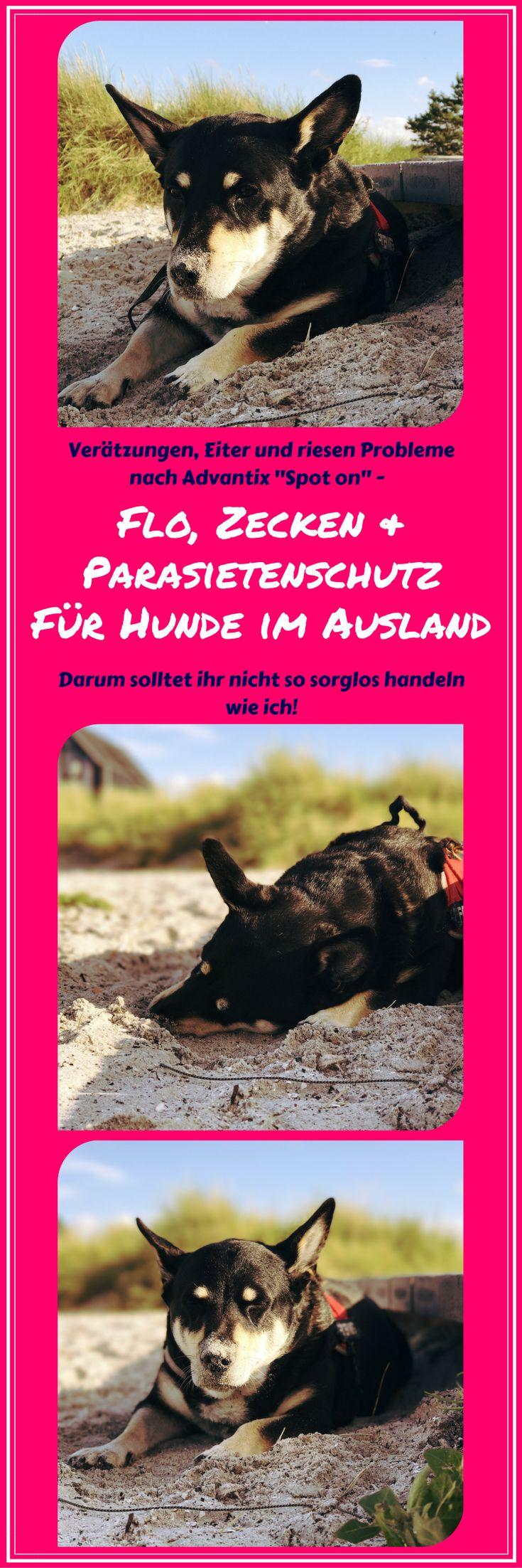 Camping mit Hund und unsere riesen Probleme nach dem Nutzen von Advantix - Flo und Zecken Schutz Spot on