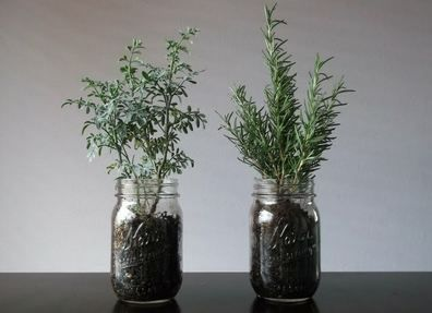 Use mason jars to plant an herb garden indoors :)