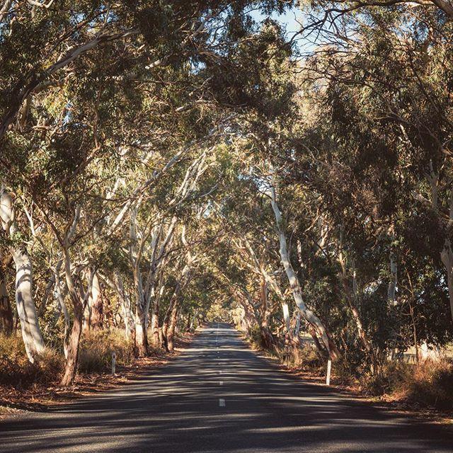 florida reisebericht tipps route f r 2 wochen mit auto florida reisen australien reise. Black Bedroom Furniture Sets. Home Design Ideas
