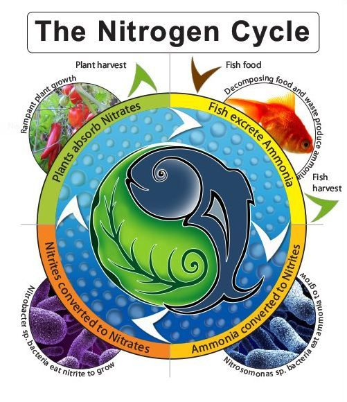 Nitrogen Cycle (very pretty). Find more information on the Nitrogen Cycle from AgSource Laboratories printable guide http://documents.crinet.com/AgSource-Cooperative-Services/Agronomy/F-04190-12---Nitrogen-Cycle-FS-GENERIC.pdf
