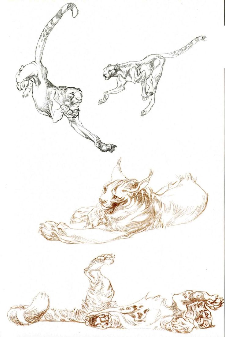 Character and Creature Design Notes: Claire Wendling's Cats