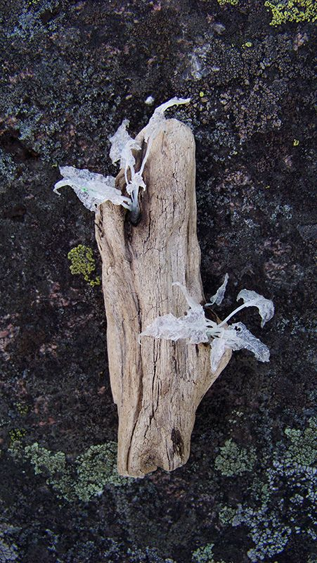 Tideroot No.4 / brooch, 10cm driftwood and recycled plastic bags silver-crane.com