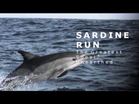 SARDINE RUN with Peter Lamberti