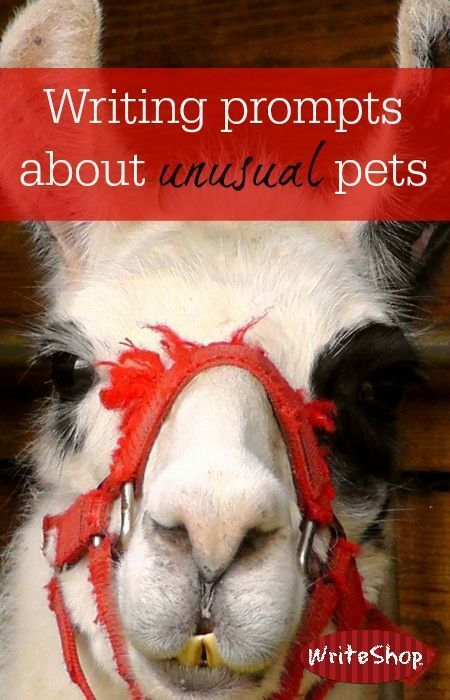 Writing prompts about unusual pets