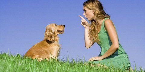 Tips cara melatih anjing duduk http://www.anjinglovers.com/cara-melatih-anjing-agar-duduk/ #anjing #anjinglovers #anjinglover #dog #pet #doglover #caramelatihanjingduduk #melatihanjingduduk #pelatihananjing #hewanpeliharaan