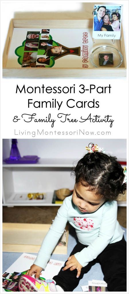 Ideas on how to prepare Montessori 3-part family cards and a family tree activity for toddlers and preschoolers; help children feel more comfortable greeting relatives and begin to learn about family history; part of the 12 Months of Montessori Learning Series