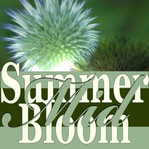 Mid Summer´s Bloom: Unwrapping The Gift Of Nature