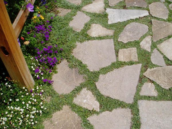 Broken concrete pavers: it looks like these have thyme growing between them.