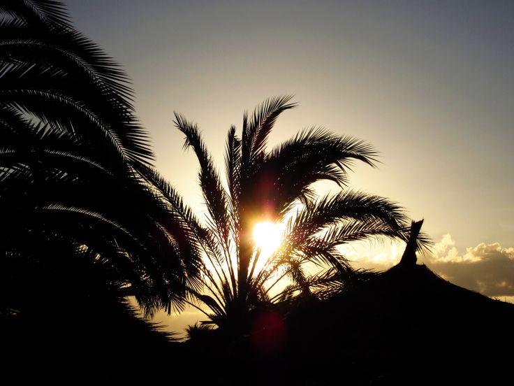 The sun rays shining through palm leaves, Tunisia