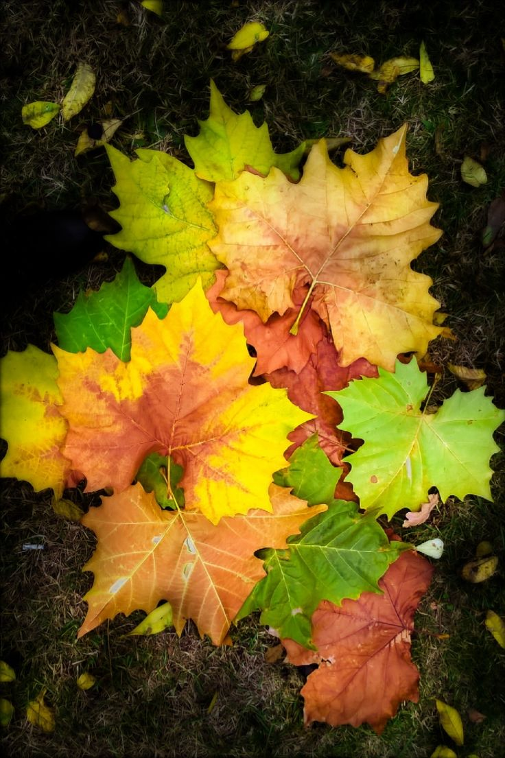 Autumn and leaves  -