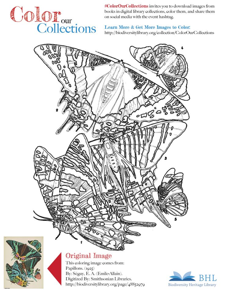 """#ColorOurCollections. Original Image: http://biodiversitylibrary.org/page/48852979. To download this image, right click on the pin and choose """"save image as"""" to save the image to your computer. You can then print and color at your leisure!"""