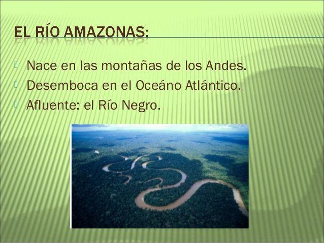 Proyecto La Selva Amazónica Selva Amazonica Animales De La Selva Selva Preescolar