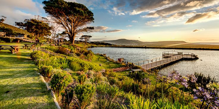 younghearts  |  Vineyard Picnics - Cape Point Vineyards