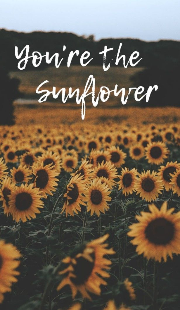 You Re The Sunflower Preppy Wallpaper Sunflower Art Print Sunflower Wallpaper