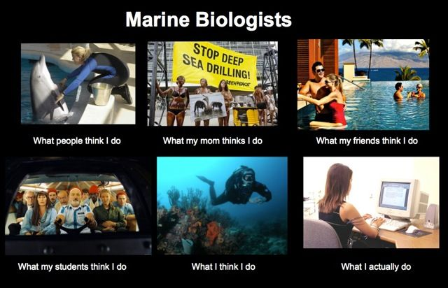 "marine biology quotes | Not-so-funny-but-true Marine Biology ""Humor"":"