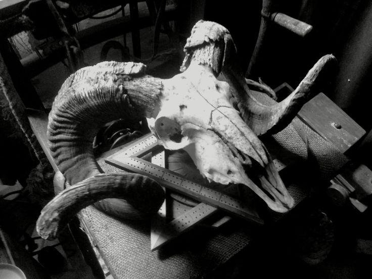 Ram Skull .Anno Domini Home