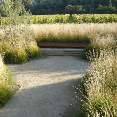 Contemporary Landscape Design - grasses and a golden palette with less greenery