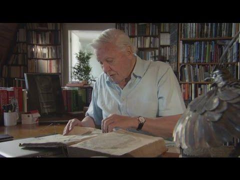 David Attenboroughs Paradise Birds   Season 1 Episode 1   Full Episode