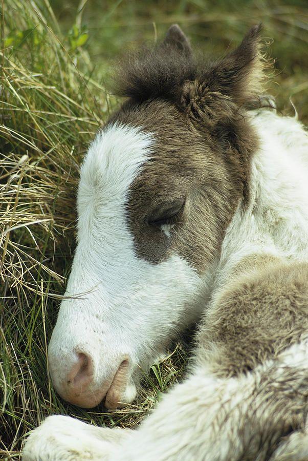 Precious foal!