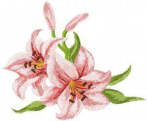 Big Lily 2